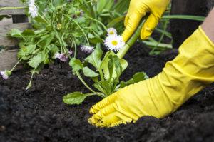 Petits  travaux de jardinage des espaces verts