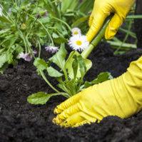 jardiner entretien nettoyage de votre jardin odi service pro la roche sur yon vendee 85